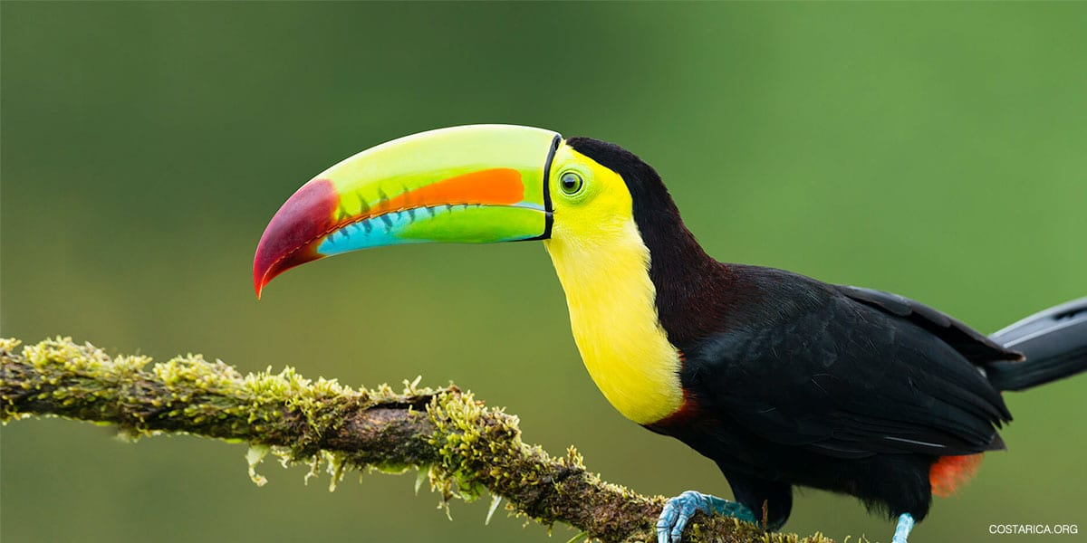 Costa Rica Nature Packages