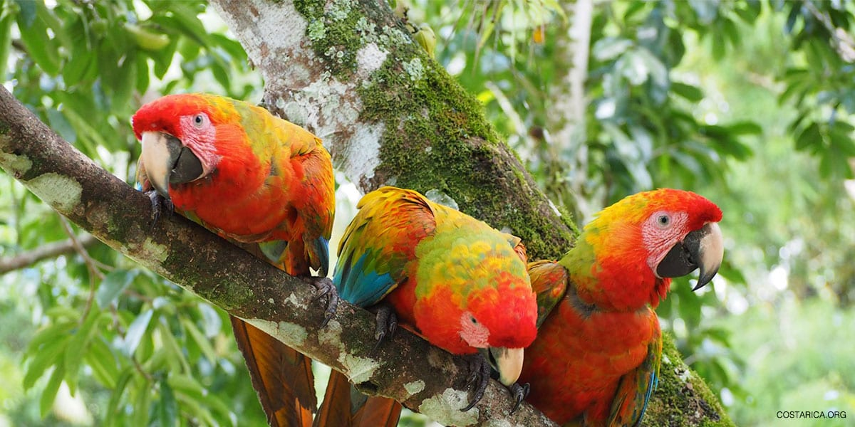 Costa Rica Classic Birding Package